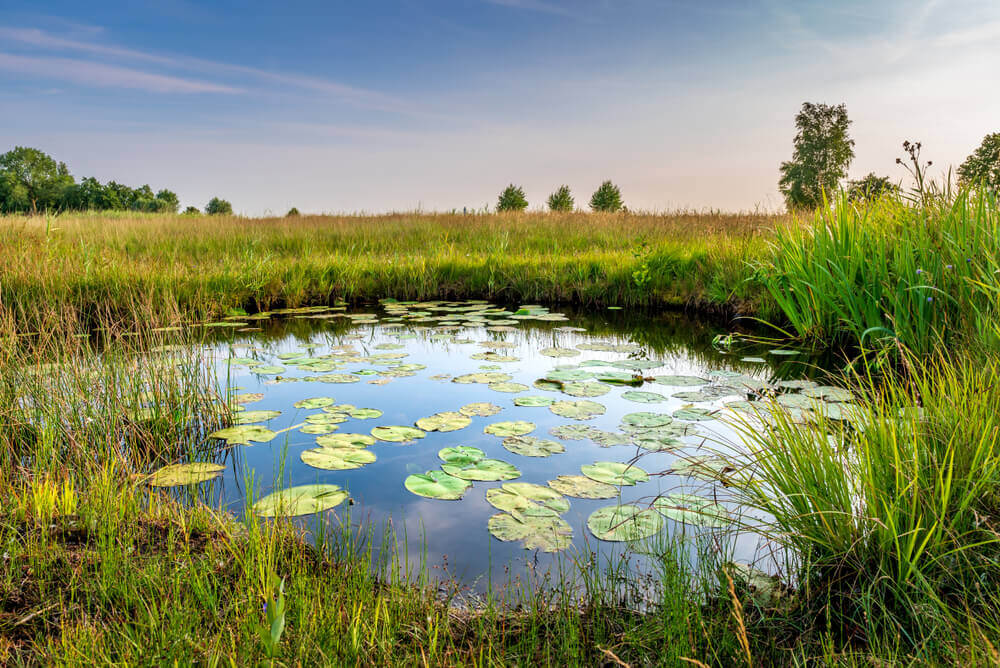 How Much Does It Cost To Build A Fishing Pond?