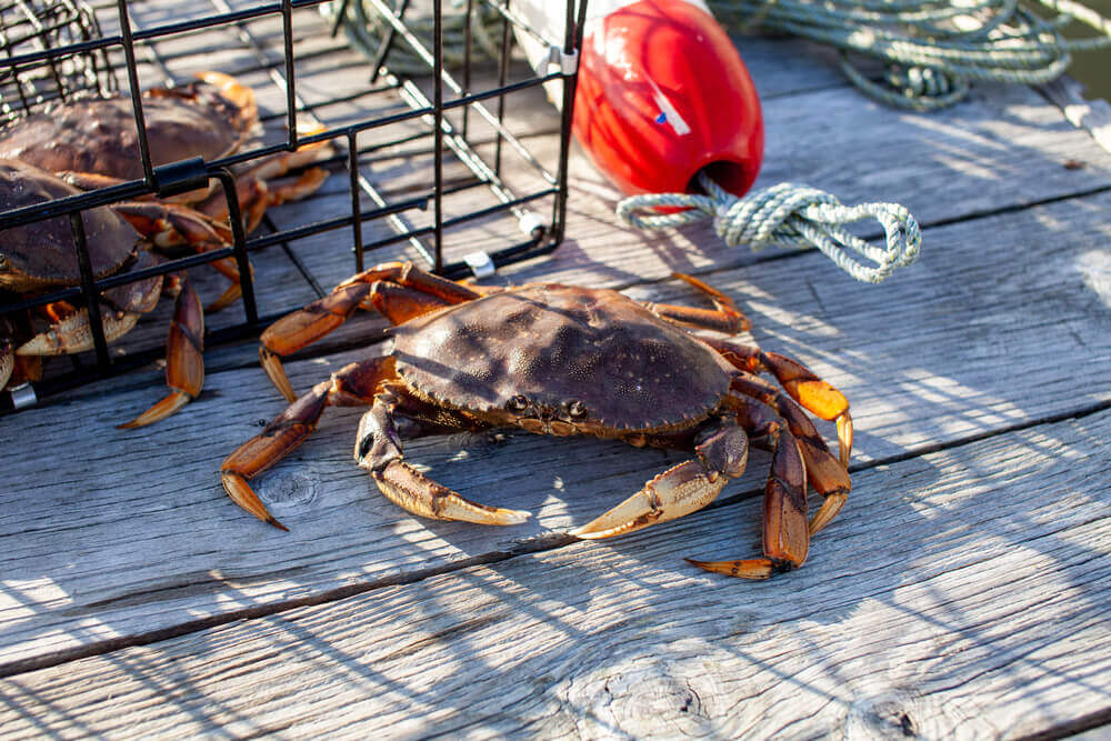 Best Blue Crab Traps
